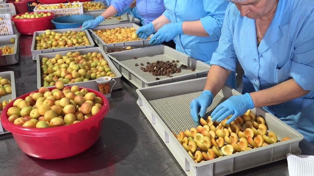Noyan noyan - Dried fruit business ...